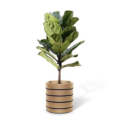 "Cotton Rope Plant Basket for 10"" Planter, Plant Pot Basket, Woven Plant Basket, Storage Basket Organizer Modern Home : Garden & Outdoor"