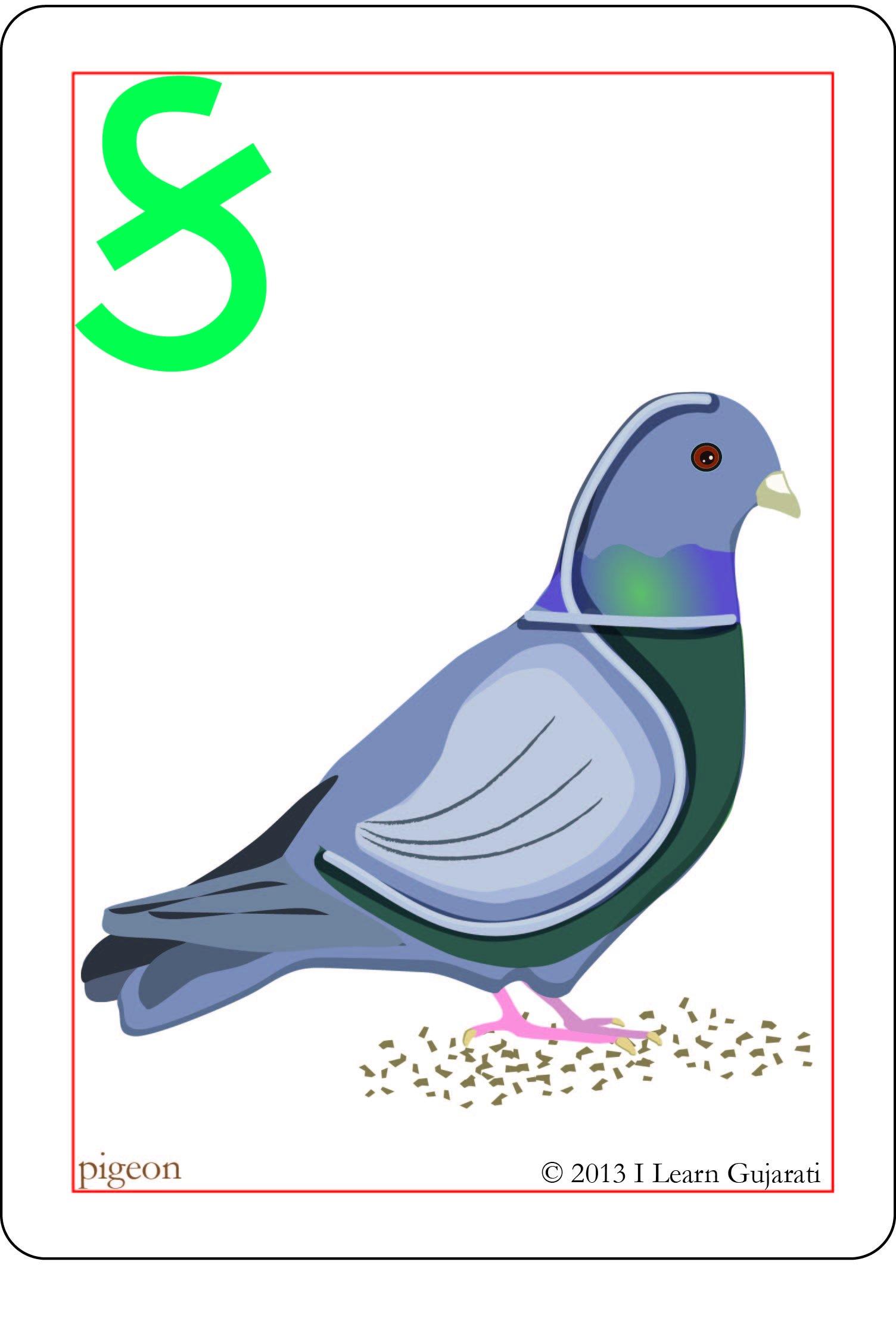 gujarati alphabet flash cards english and gujarati edition anshu jain 9780982682715 books amazonca