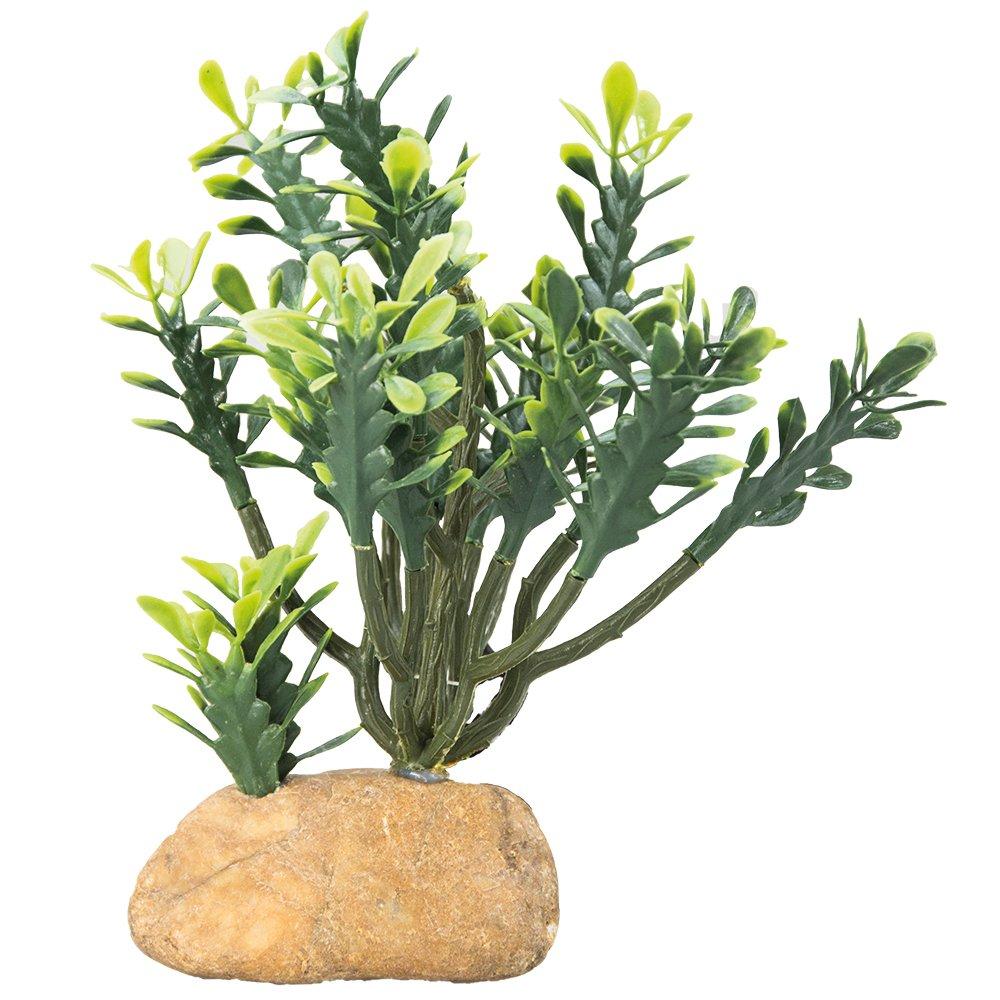Hobby Euphorbia Décoration de l'Habitat/Arbres de Décoration pour Reptile/Amphibien L 25 x 10 x 46 cm 37000