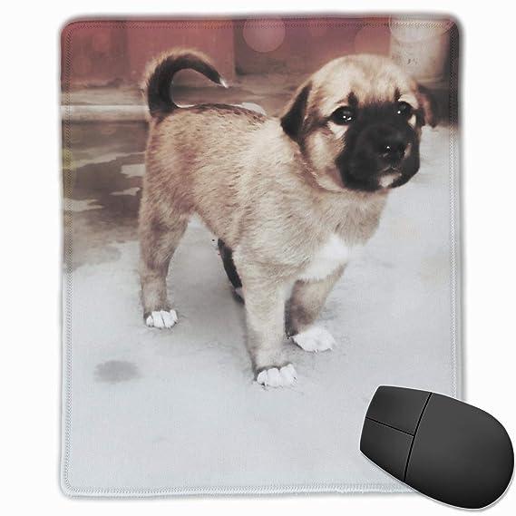 ff1f62a4874a Amazon.com: Mouse Pads Dog Mouse Mat Stitched Edge Non-Slip Rubber ...