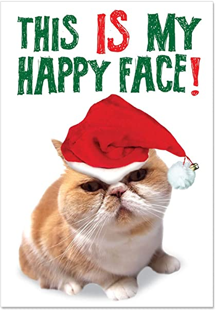 Kitten Christmas Cards.12 Happy Face Boxed Christmas Cards With Envelopes 4 63 X 6 75 Inch Hilarious Angry Kitty Holiday Cards Silly Kitten Christmas Notes Cute Grumpy