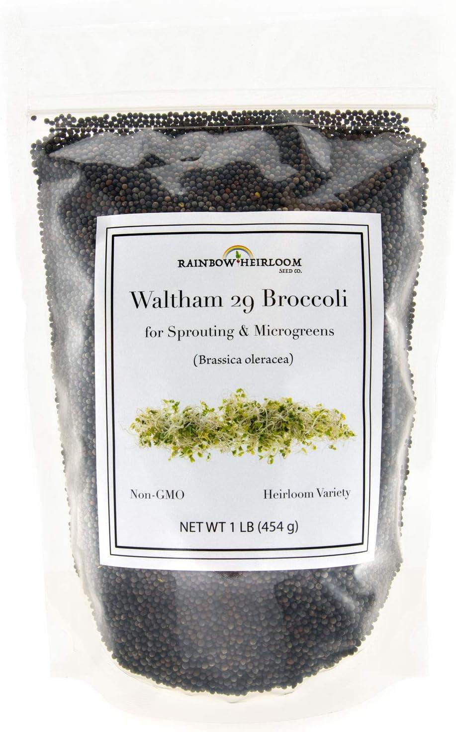 seeds BROCOLI VIOLETA purple broccoli 200 Semillas
