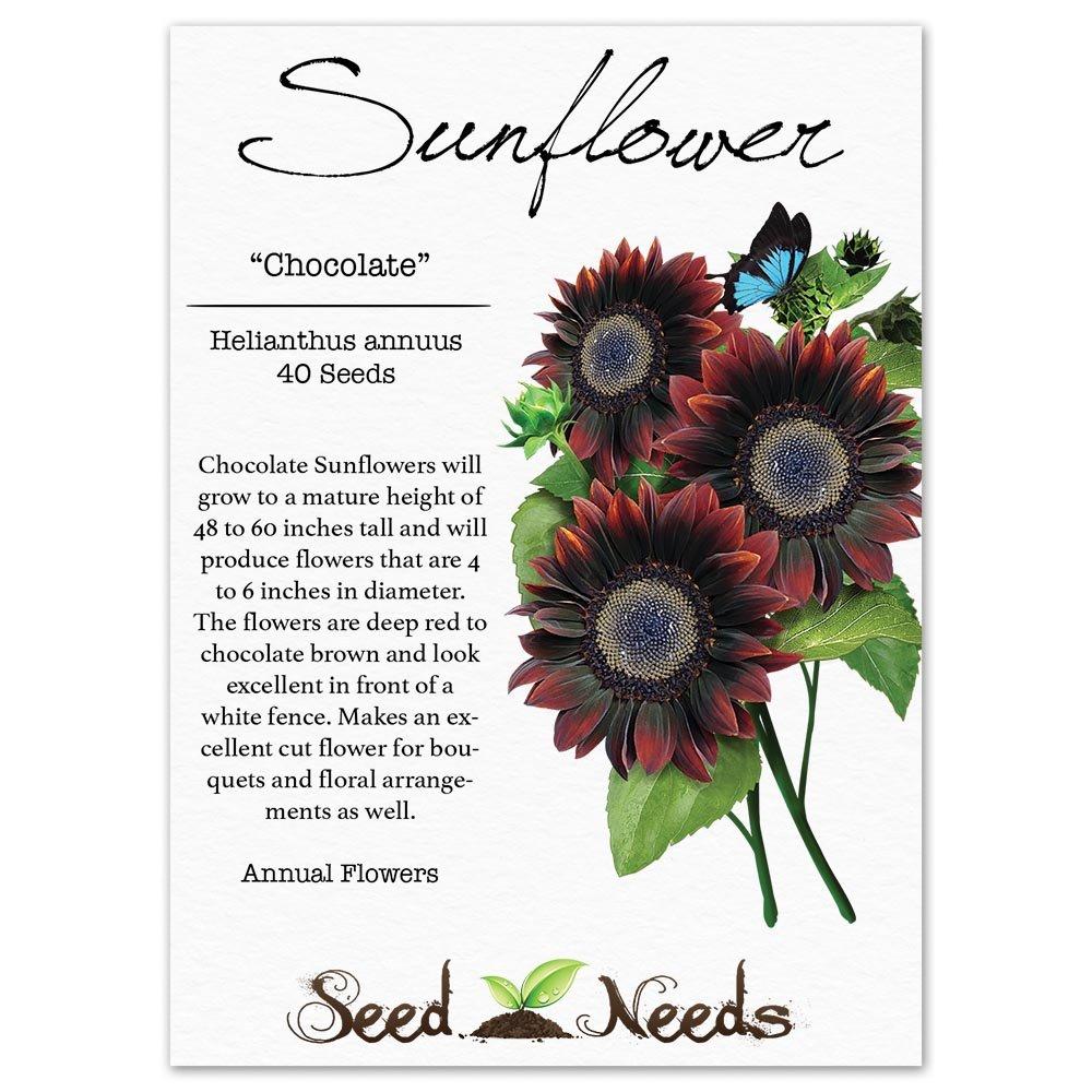 Amazon Package Of 40 Seeds Chocolate Sunflower Helianthus