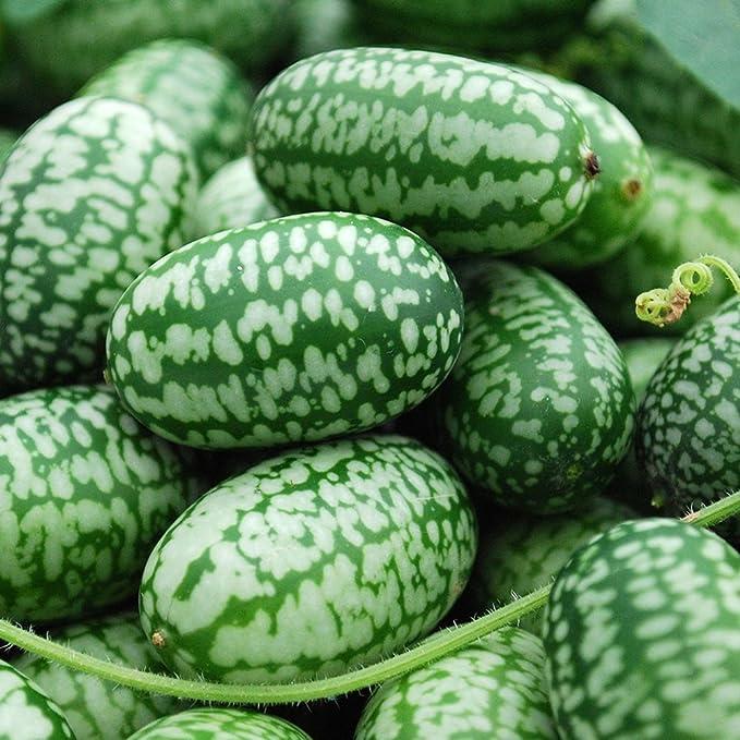 Min 20 Seeds Mexican Mini Melon Vegetable Seeds Semi Melothria SCABRA