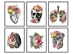 Medical Anatomical Art Set - 8x10 Vintage Floral Anatomy Posters - Retro Wall Decor for Doctors Office, Clinic, Med Student Dorm - Shabby Chic Gift for Nurses, Physicians Assistant PA -Unframed Photos