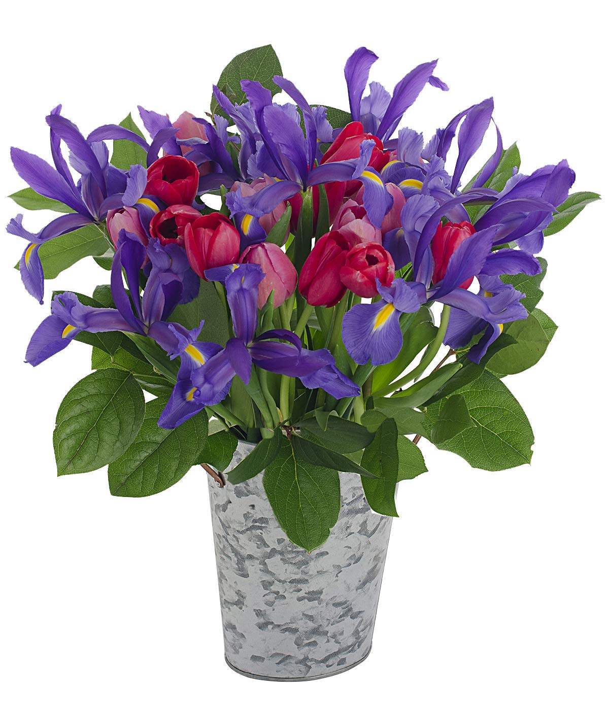 Stargazer Barn Stargazer Barn - Big Hug Bouquet - 26 Stems Of Tulips and Telstar Iris With Vase - Farm Fresh by Stargazer Barn