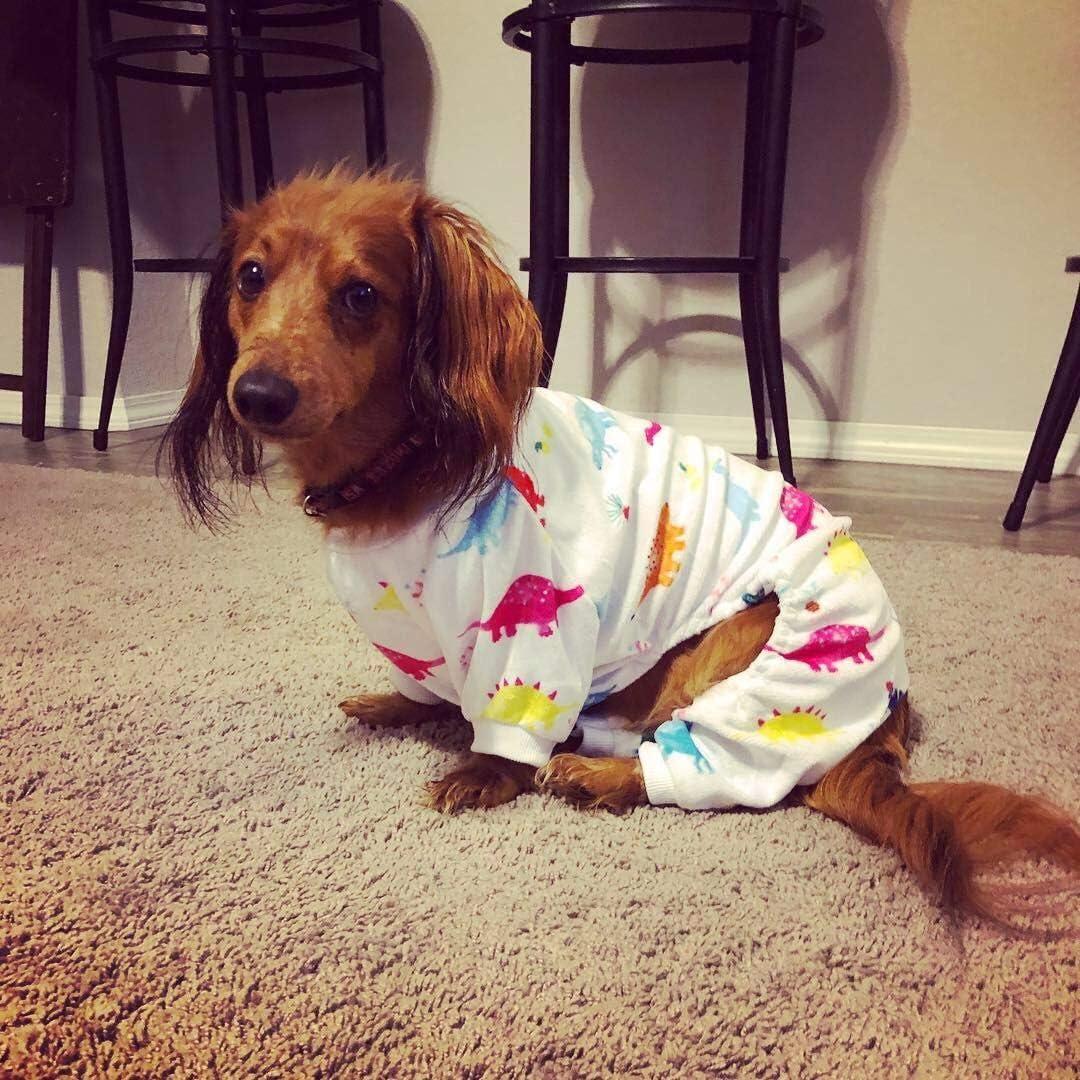 Comprar pijamas para perros grandes y pequeños guía