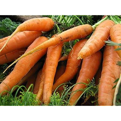 1/4LB or 76k Seeds Scarlet Nantes Carrot Seeds, Early Coreless, Non-GMO, Variety Sizes : Garden & Outdoor