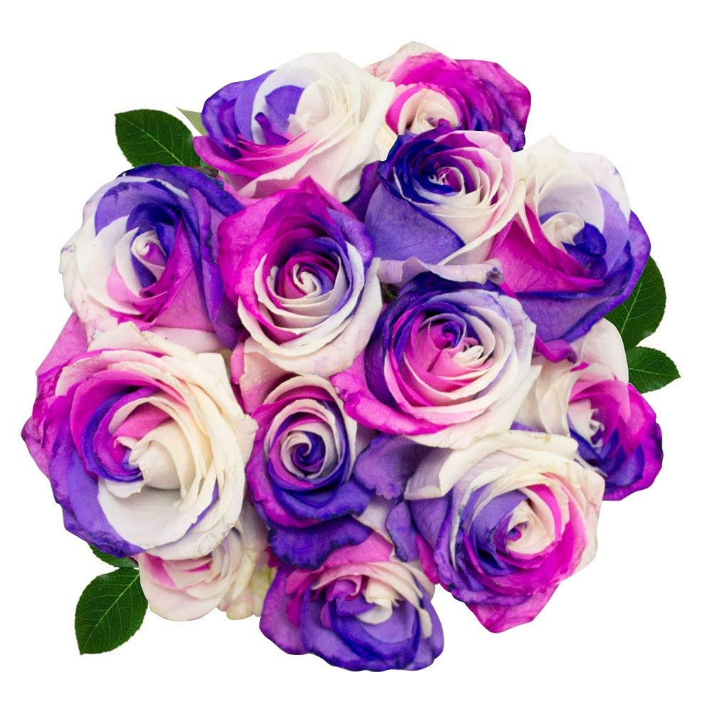 FRESH Tinted Roses| Pink and Purple| 25 stems (Sun Rose) Magnaflor - XXL Blooms| Bunch| 10-12 days vase Life