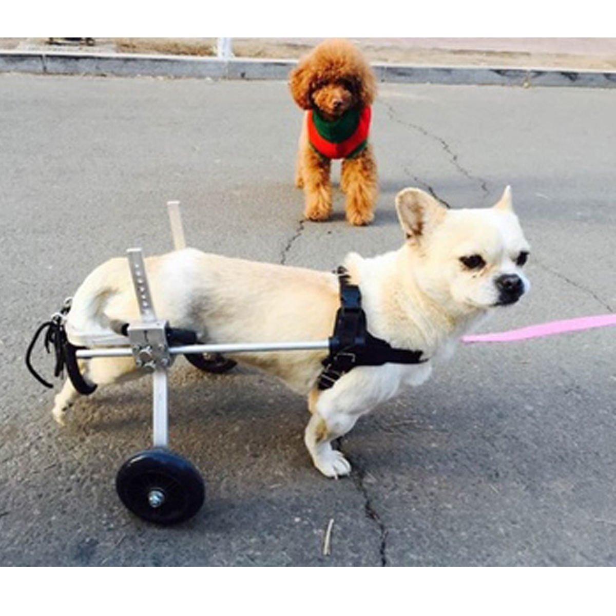 Chende Laisse pour chien réglable - Fauteuil roulant pour animal à mobilité réduite Tochic company
