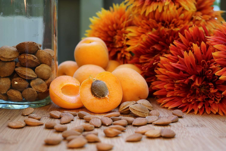 Fresh Bitter Raw Apricot Seeds | 100% Natural | 2LB Bag …