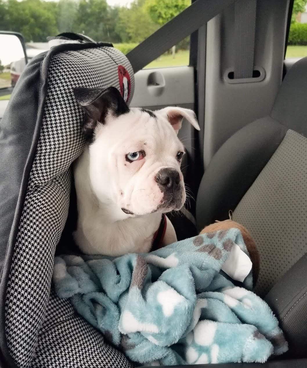 Amazon.com: pupsaver Original perro asiento de coche, color ...