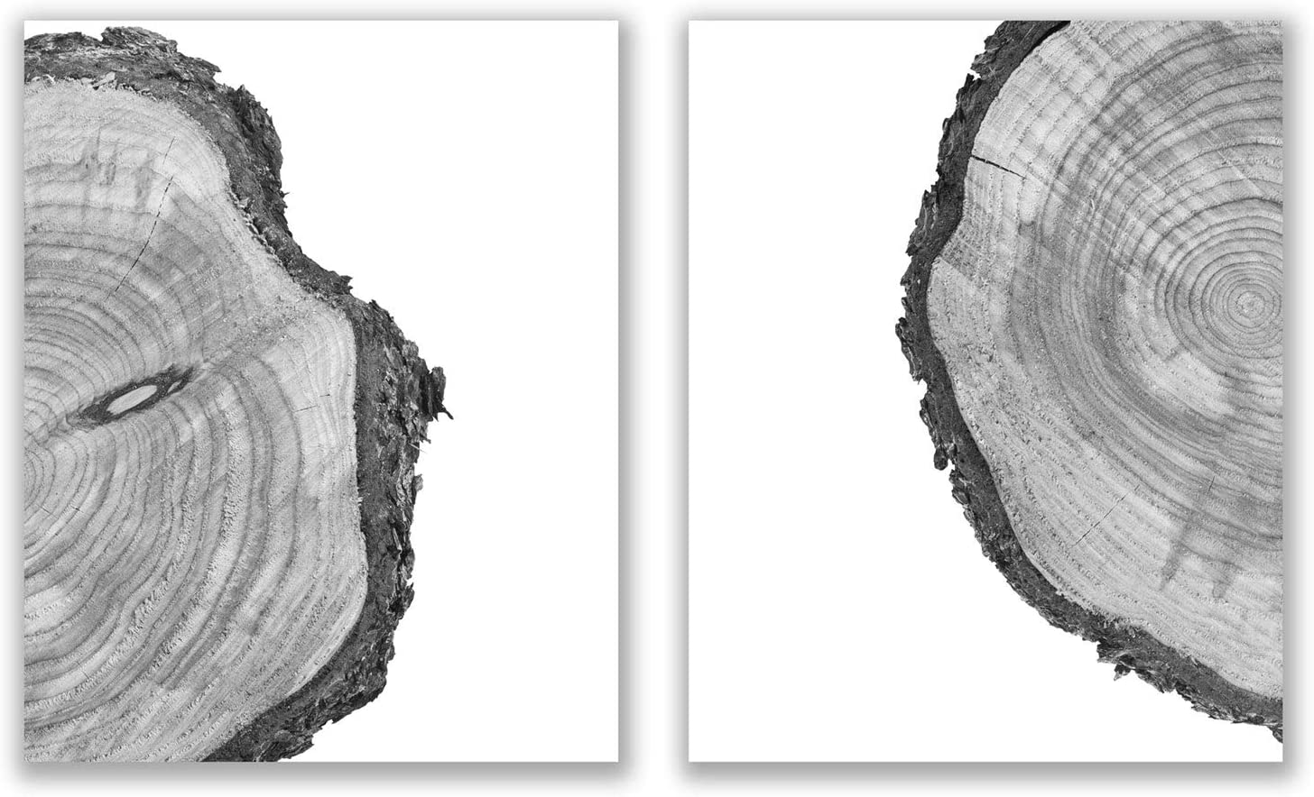 Tree Rings Prints - Set of 2 (8x10) Glossy Black and White Modern Nature Forest Scandinavain Farmhouse Minimalist Wall Art Photography Decor