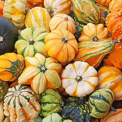 Image result for rare squashes pumpkins