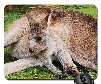 Amazon com : Mouse Pads - Wallaby Kangaroo Joey Baby Animal
