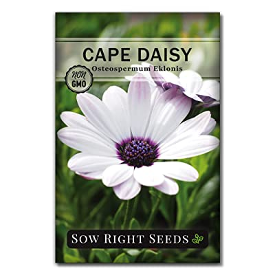 Sow Right Seeds Cape Daisy Seeds - Full Instructions for Planting, Beautiful to Plant in Your Flower Garden; Non-GMO Heirloom Seeds; Wonderful Gardening Gifts (1) : Garden & Outdoor