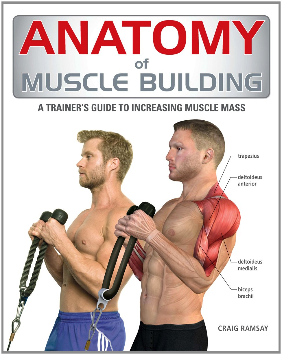 anatomy of muscle building a trainer s guide to increasing muscle