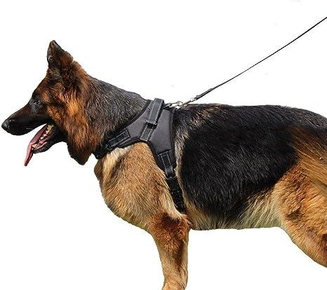 FidgetGear - Arnés Grande para Perro, Collar para Mascotas ...