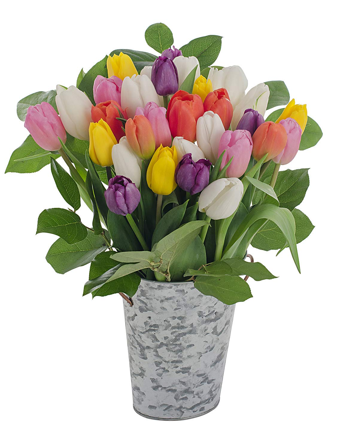 Stargazer Barn Rainbow Bouquet 30 Stems of Fresh Tulips with French Bucket Style Vase by Stargazer Barn
