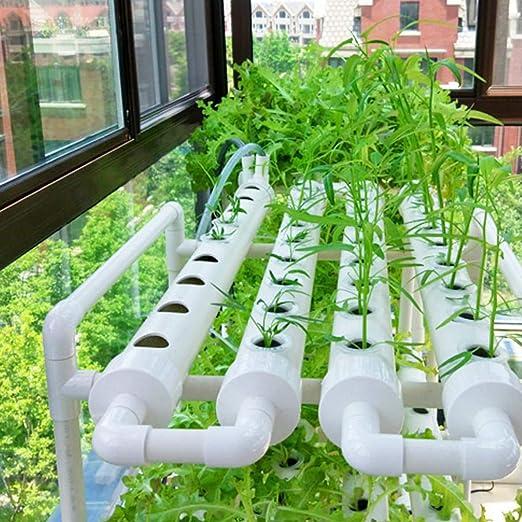 BJF Kit de Cultivo hidropónico, 1 Capa de 36 Agujeros Kit de Cultivo hidropónico, tubería hidropónica Horizontal para jardín Cultivar apio de Hierbas de Vegetales Frescos: Amazon.es: Hogar