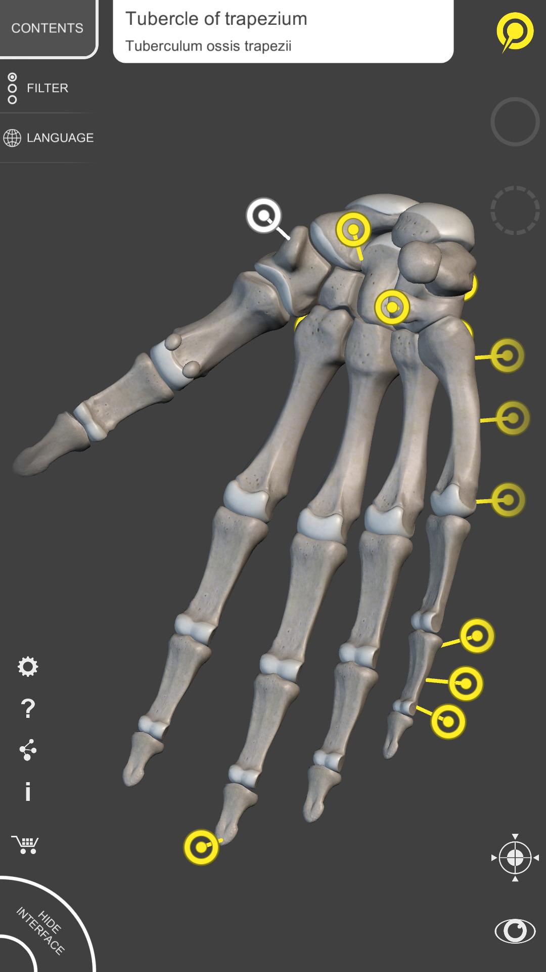 Amazon.com: Skeletal System 3D Atlas of Anatomy Lite: Appstore for ...