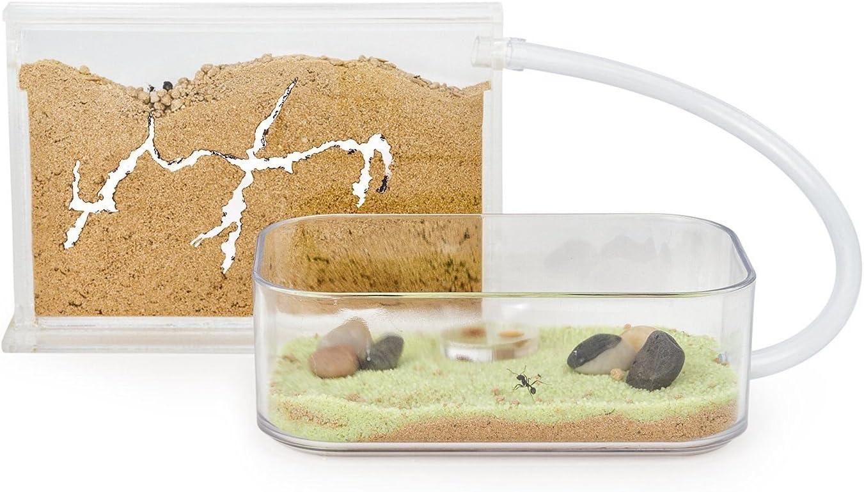 Educational formicarium for Live Ants Sand Ant Farm Basic