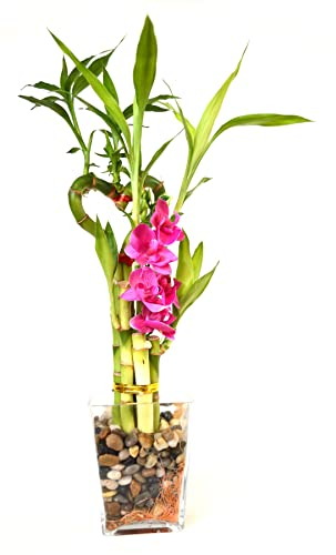 9GreenBox – Lucky Bamboo – Heart Syle with Silk Flowers and Glass Vase and Pebbles