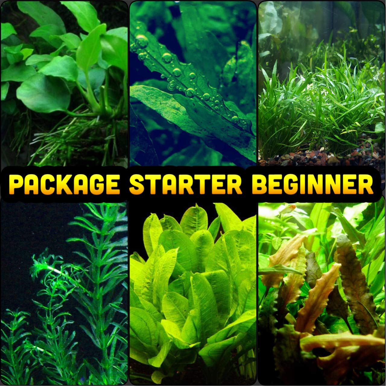 Mainam 30+ Stems Package Starter Beginner Set Live Aquarium Plants Micro Sword, Rosette Amazon Sword, Anubias, Java Fern and More by Mainam