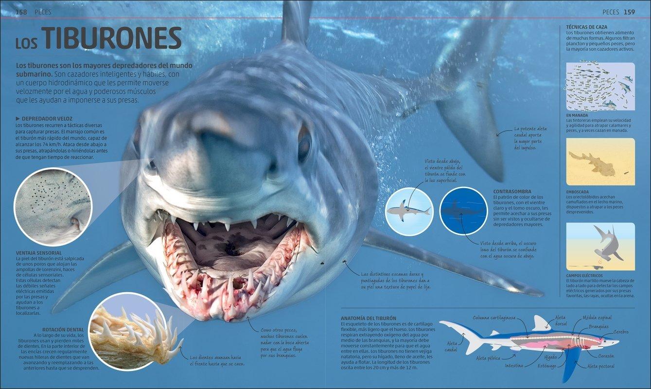 El tiburon de dos cabezas online dating
