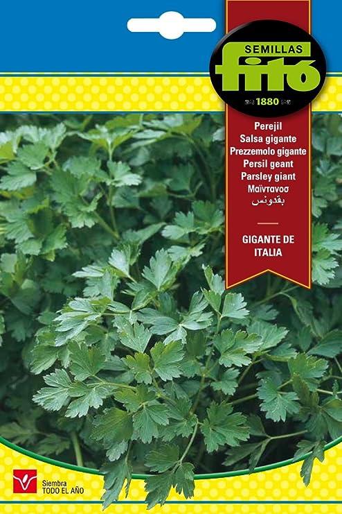 Semillas Fitó 3777 - Perejil Gigante Italiano: Amazon.es: Jardín