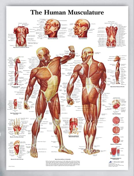 T Yifuzx English Version Human Body Parts Analysis Poster Human Anatomy Diagram Canvas Painting Hospital Clinical Research Diagram 40x50cm Amazon Co Uk Kitchen Home