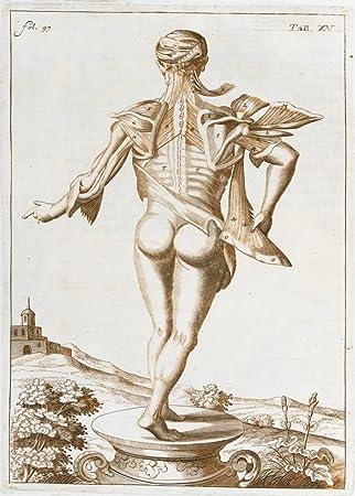 Amazon.de: \'Jahrgang Anatomie \