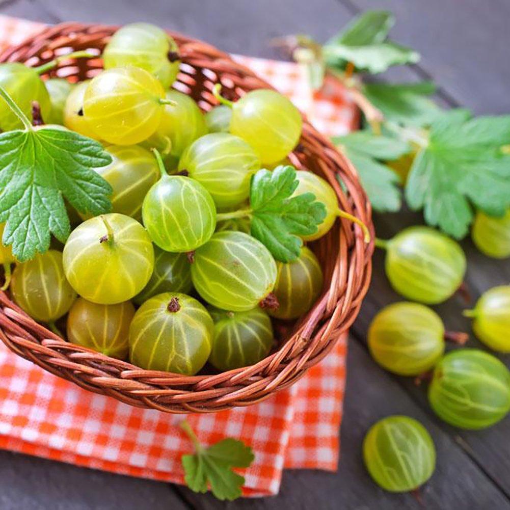 Austinstore 50Pcs Organic Gooseberry Currant Fruit Seeds Juicy Home Garden Bonsai Plant