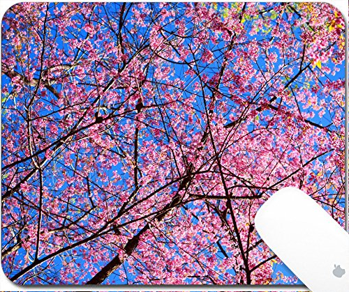 Luxlady Gaming Mousepad 9.25in X 7.25in IMAGE: 23082640 Full Bloom Cherry Blossom with Blue - Contact Coloured Hut