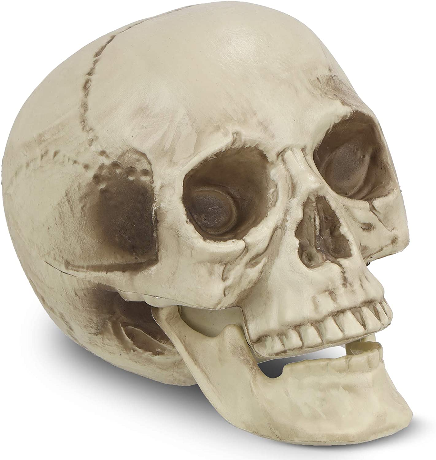 Oberhoffe Halloween Skulls Realistic Looking Skulls Human Skeleton Head Skull,Halloween Skull Decorationfor,Spooky Halloween Party Decorations & Gothic Kitchen Decor (Printed Head Skull)