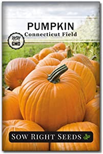 Sow Right Seeds - Connecticut Field Pumpkin Seed for Planting - Non-GMO Heirloom Packet with Instructions to Plant a Home Vegetable Garden - Great Gardening Gift (1)