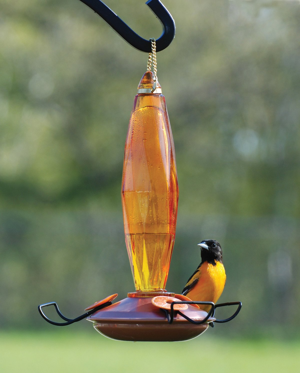 special baltimore feeding guest feeder oriole youtube with orioles watch best