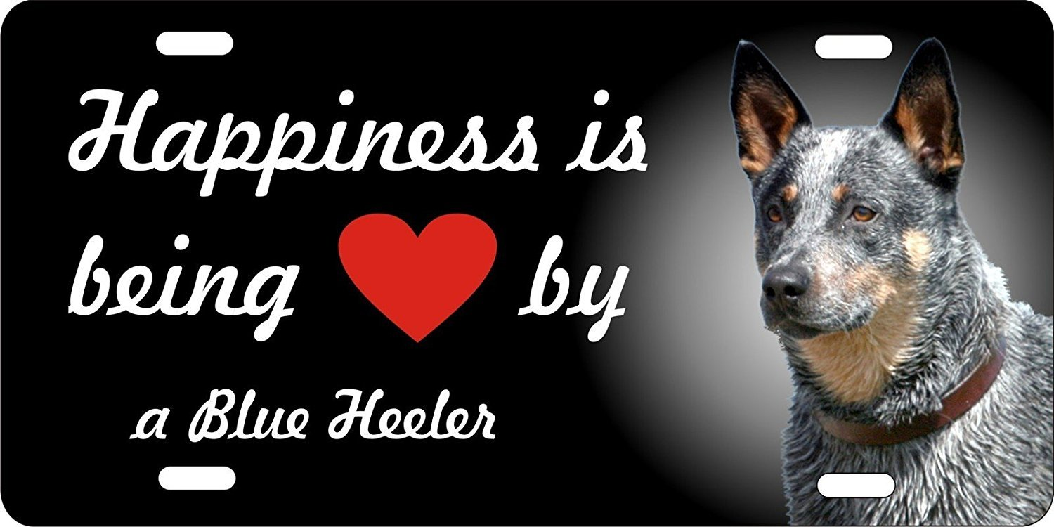 Amilly Personalized Custom Happiness is Being Loved By a Blue Heeler Dog License Plate 6'' x 12''metal License stainless steel License Fun License Plate Fun