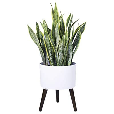 "Indoor Modern Planter Pot with Stand - Matte White - with Drainage Hole and Plug, 12"" Pot x 16"" Height with Stand : Garden & Outdoor"