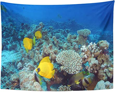 Tapestry Blue Reef Marine Life In The Red Sea Activity Home Decor Wall Hanging for Living Room Bedroom Dormisette 50 x 60 Inches: Amazon.es: Juguetes y juegos