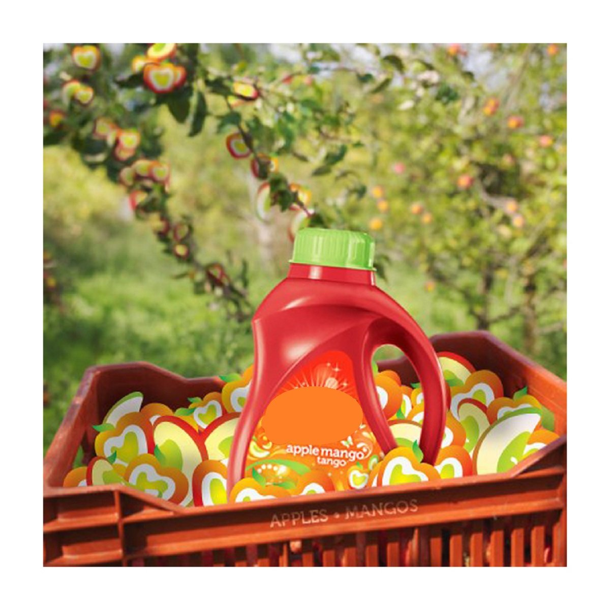 GAIN Apple Mango Tango Type Fragrance Oil - 16 oz/1 LB - for Candle & SOAP Making by Virginia Candle Supply - Free S&H in USA