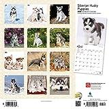 Siberian Husky Puppies 2020 12 x 12 Inch Monthly