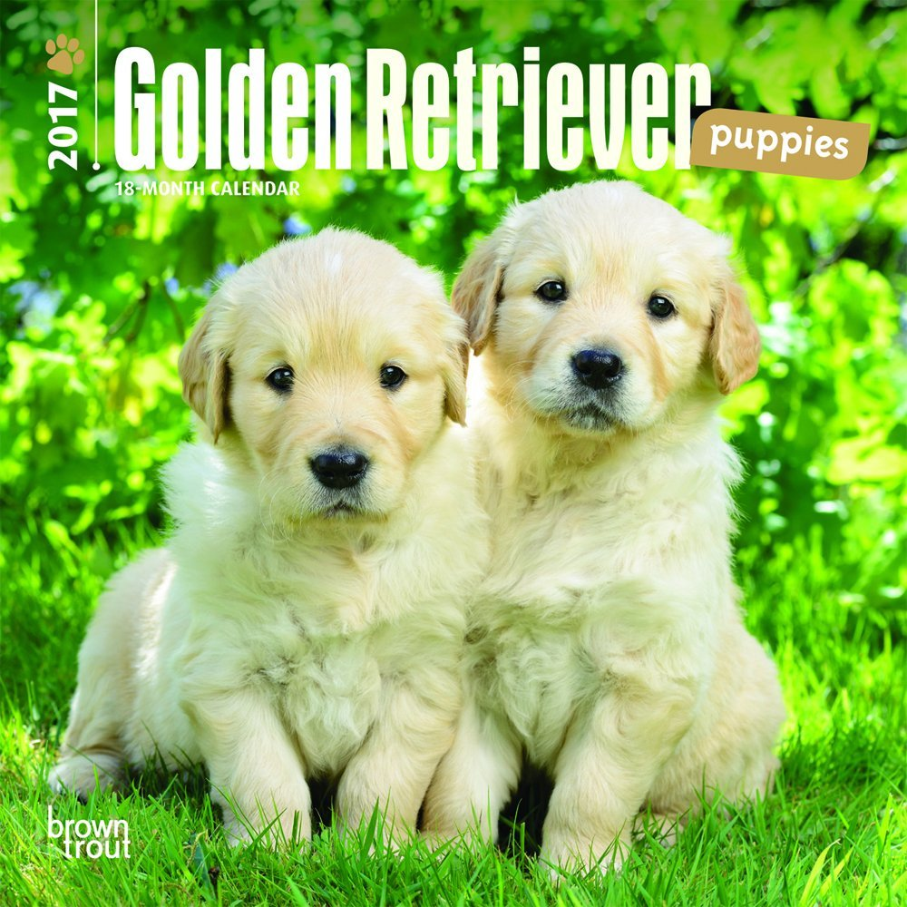 amazon golden retriever puppies 2017 calendar inc browntrout