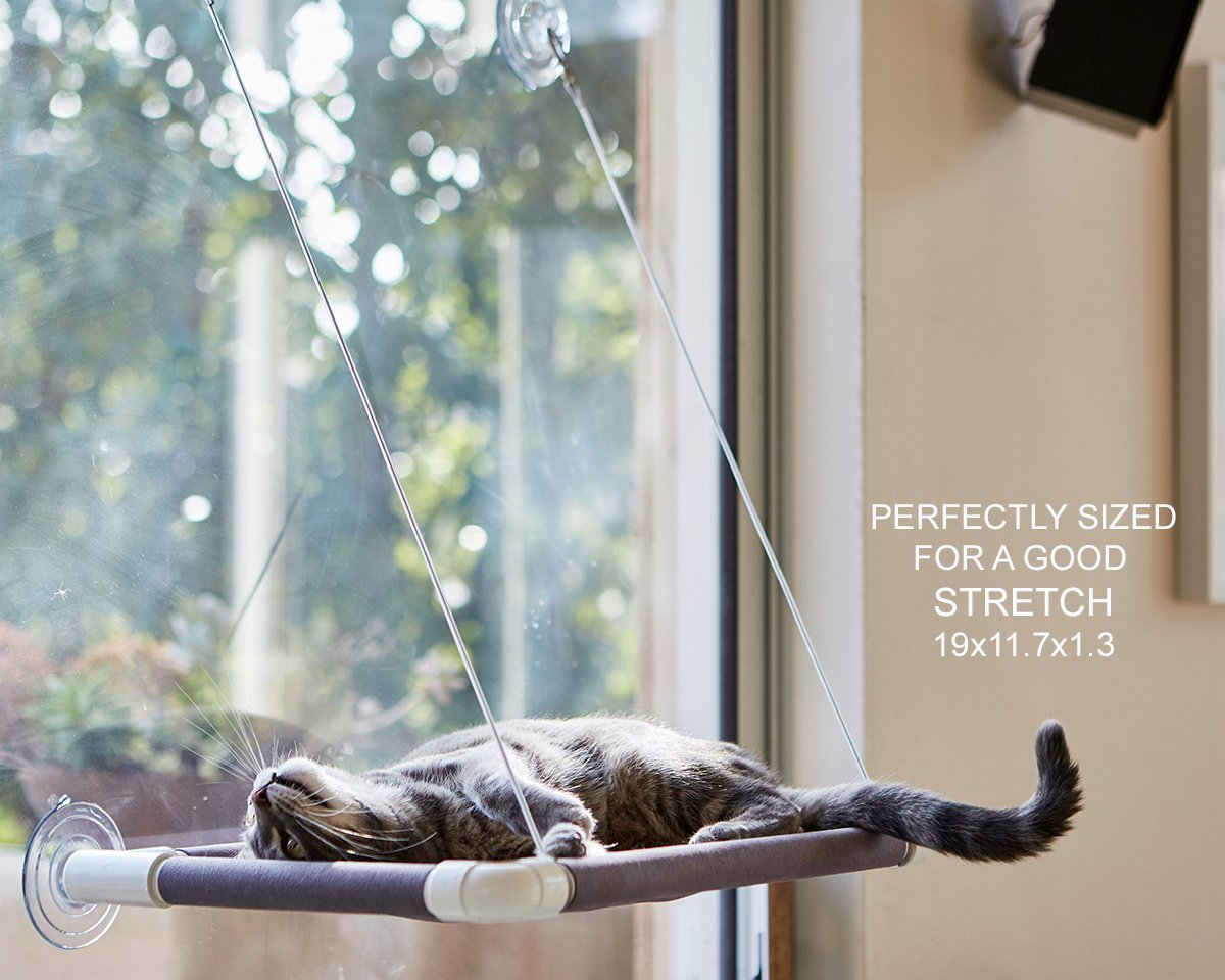 window extension for cats