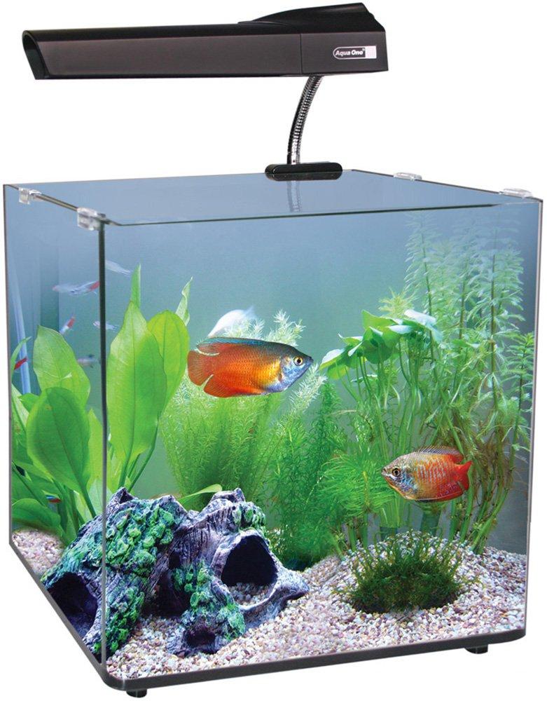 Aqua One Acuario Aqua Nano 40 Vidrio Tropical de 55 l, 40 cm.: Amazon.es: Productos para mascotas