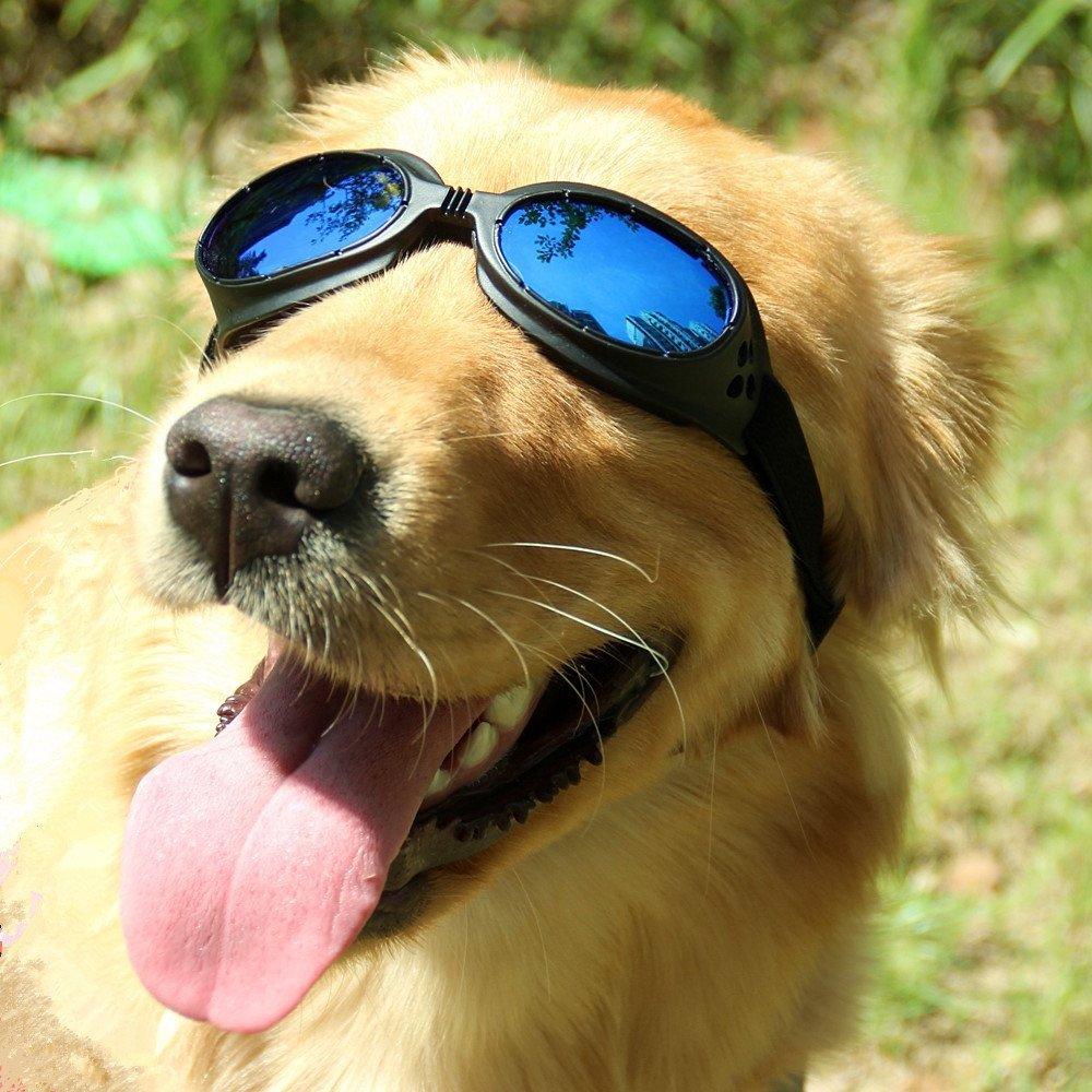 SCENEREAL CO. Lunettes de chien pour animal domestique Bleu Lunettes de soleil, lentilles, protection UV Antibuée coupe-vent d'herbes, tour de tête 35–51cm tour de tête 35-51cm SAILE