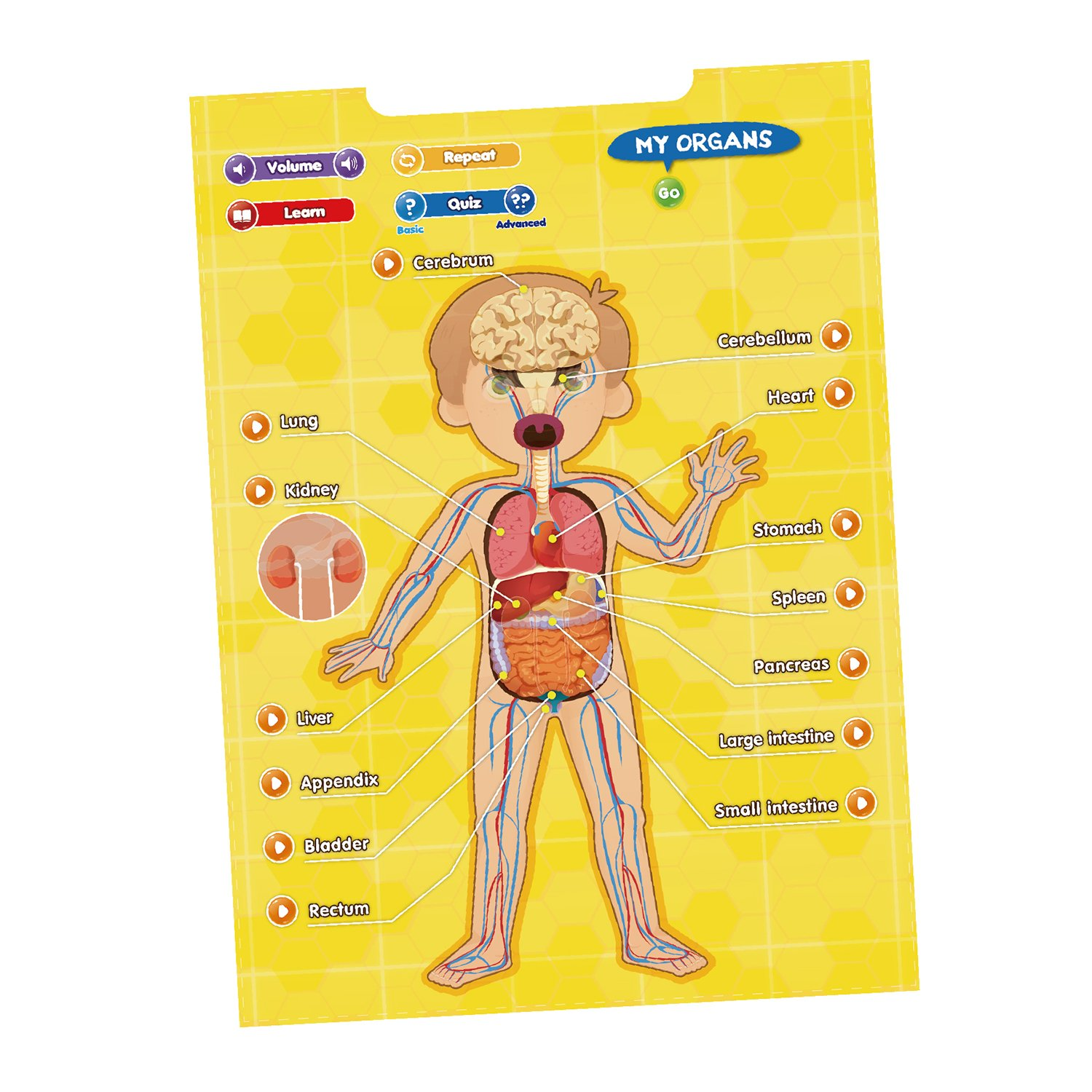 Best Learning I Poster My Body Interactive Educational Human