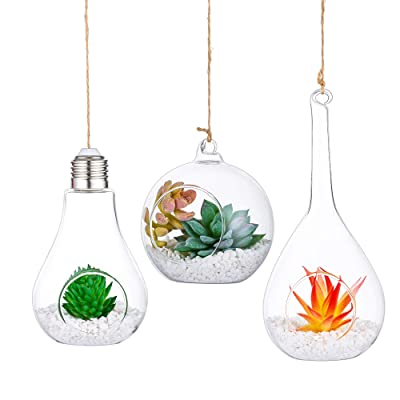 3 PCS Hanging Glass Terrarium Globes with Twine Rope Balls Decorations Round, Olive and Bulb Orbs Air Plants Hanger Vase for Succulent, Moss, Tillandsias, Air Ferns: Garden & Outdoor