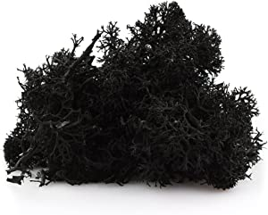 1 LB Black Preserved Reindeer Moss - Indoor Outdoor for Potted Plants, Terrariums, Fairy Gardens, Arts and Crafts or Floral Decor Design