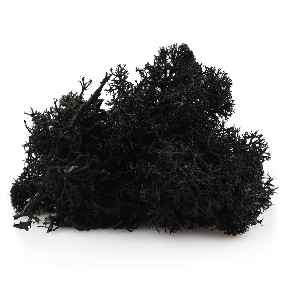 NW Wholesaler Preserved Reindeer Moss for Terrariums Blue Arts /& Crafts Fairy Gardens 9 Colors to Choose from